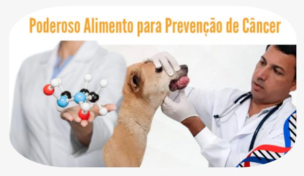 Saúde e  Longevidade Para seu Cão